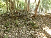 4中世観瀧寺跡最上段曲輪石垣