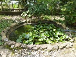 14本野邸池