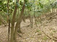 33中世観瀧寺跡土塁北側曲輪散乱石材16