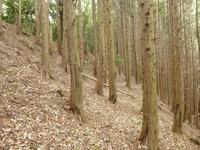 9中世観瀧寺跡下の急斜面