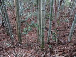 1福知山市陸軍演習陣地大穴