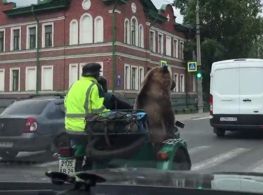クマがサイドカーに乗ってる