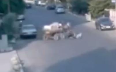 馬がバイクを頭突きで倒す