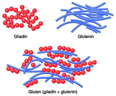 Gluten-3