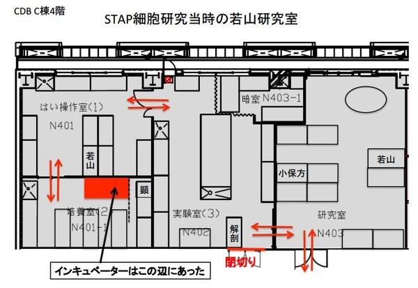 STAP-25