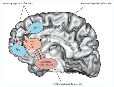 うつ病の神経回路