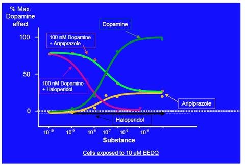 エビリファイはドーパミンシステムを安定化させる