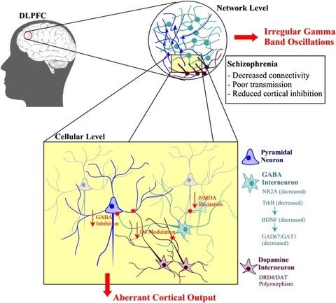 DLPFC いずれにせよ、脳内のグルタミン酸の増加を抑え、GABAの低下を防ぐこと...  場末