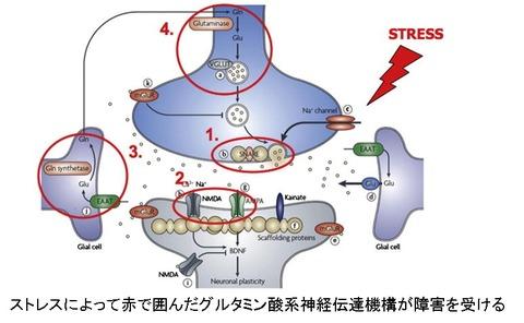 ストレスとグルタミン酸