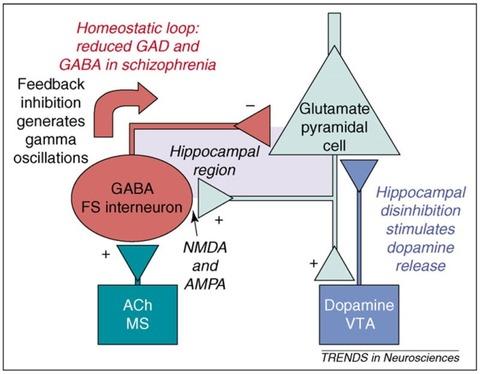 GABA-interneuron2