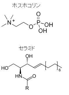 ホスホコリン セラミド