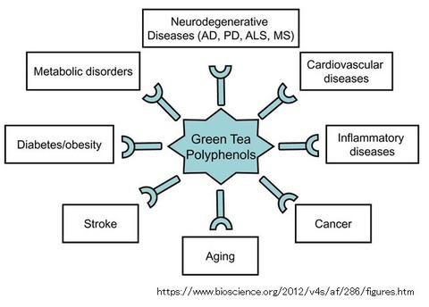 green tea-18