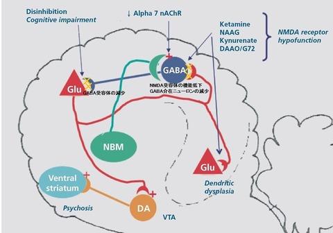 GABA-iterneuron-SZ この状況は、GABA介在ニューロンによる抑制がかからなくな