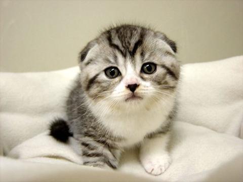 可愛い猫17