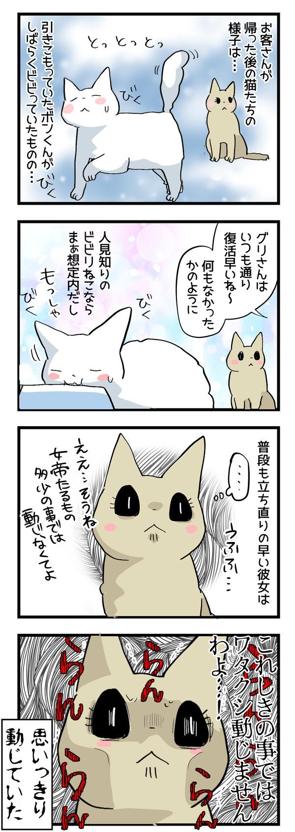 猫たちの変化