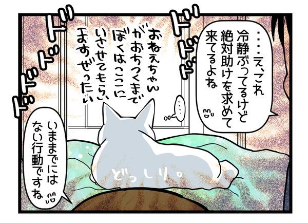 猫たちの変化4-3