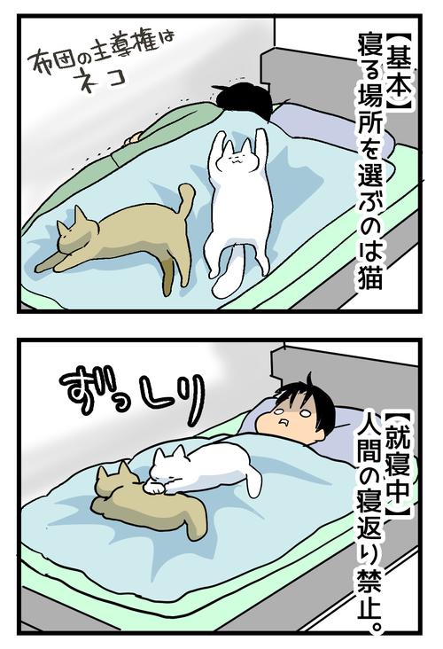 猫を飼うと2