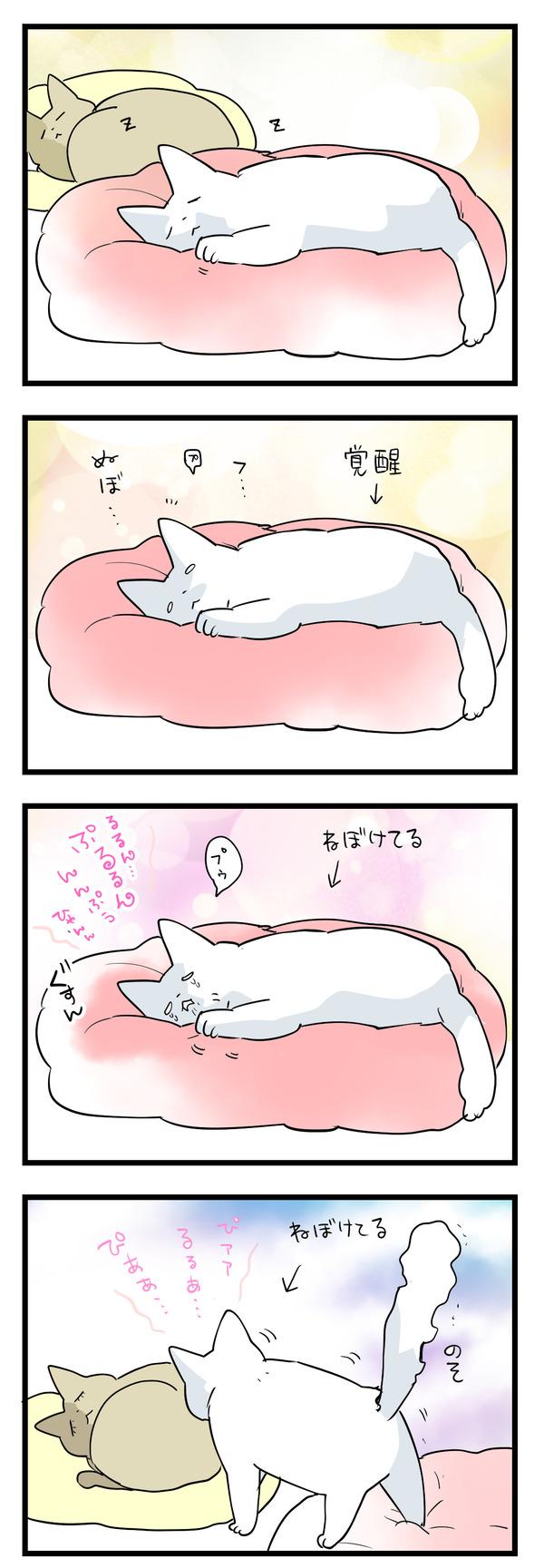 寝ぼけてるボン