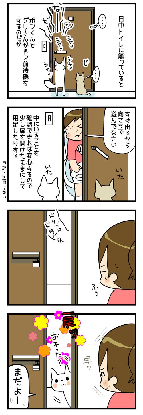 猫とトイレと私