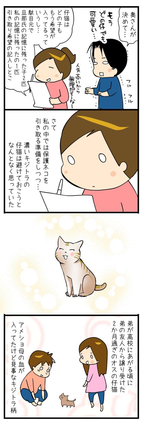 ネコさんを迎えたいの2