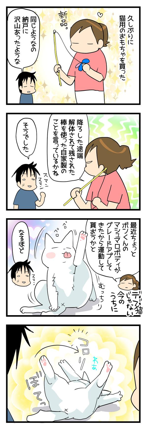 猫の運動1