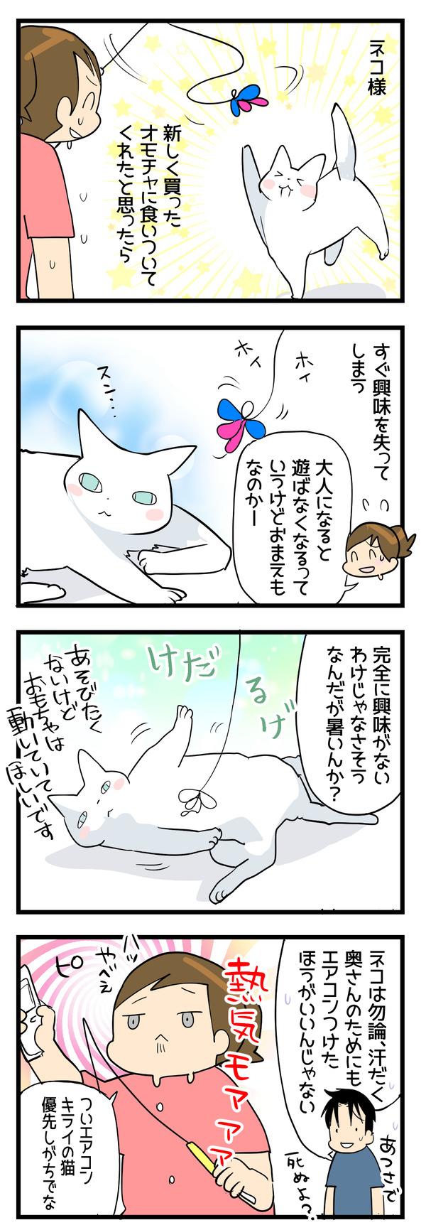 ネコとオモチャ