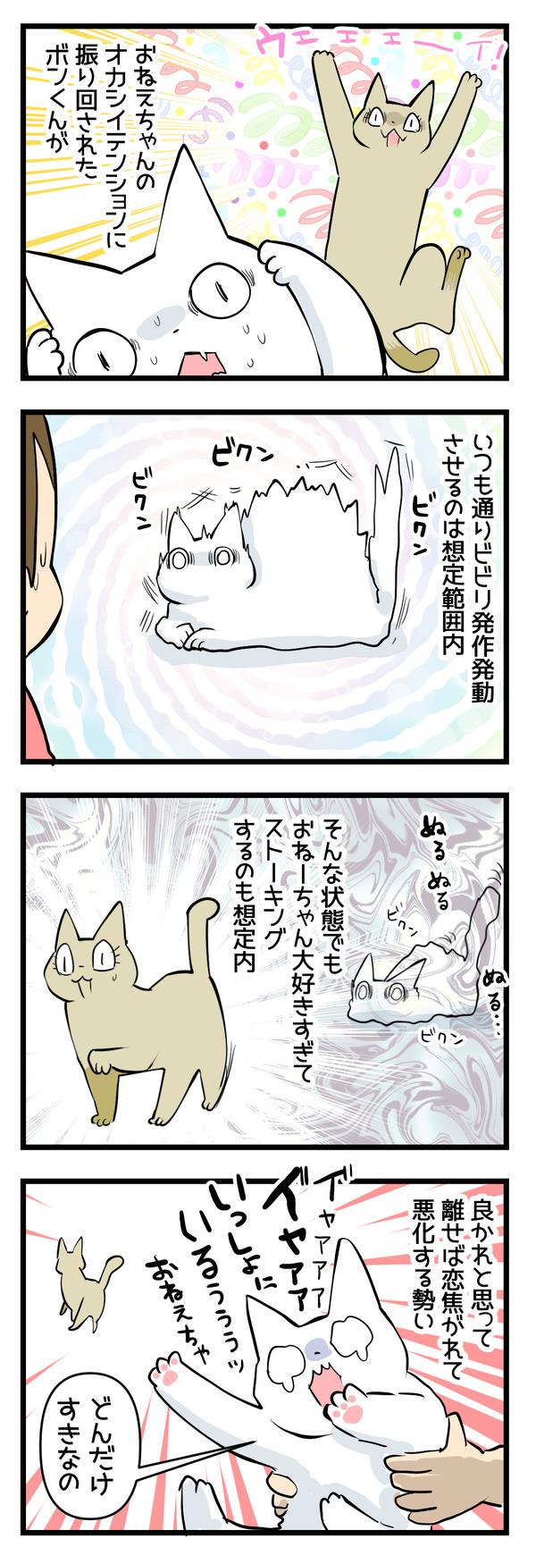 猫たちの変化4