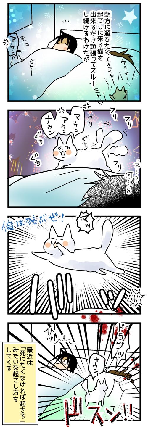 猫のおこしかた