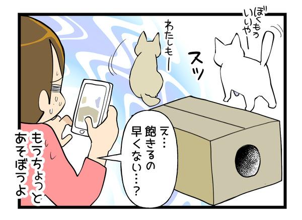 猫ホイホイ箱2