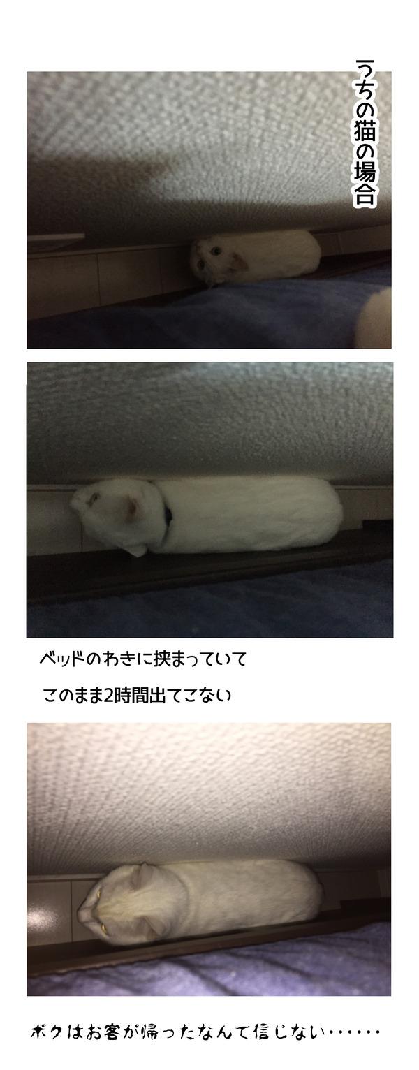 ビビリ猫2