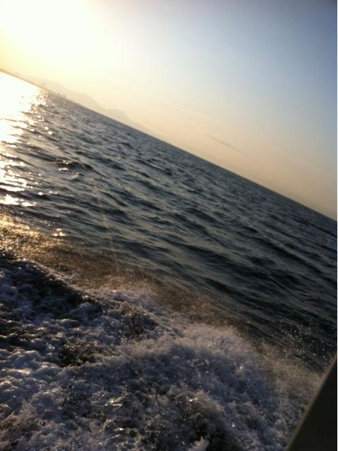 有明海 メバル