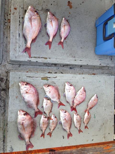 有明海の真鯛釣り