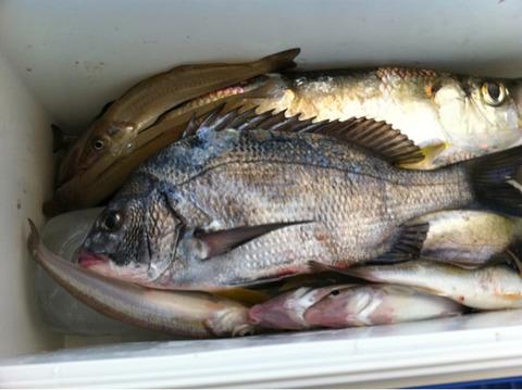 近海ぶらぶら釣り