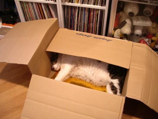 箱の中でお休み