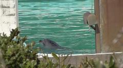 イルカが閉鎖水族館に残され孤独…「譲渡先早く決めてあげて」