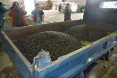シジミ385キロを廃棄処分/米軍機タンク投棄で小川原湖漁協