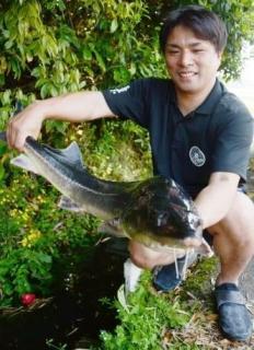住民驚き、用水路から体長105センチチョウザメ? さつま町時吉
