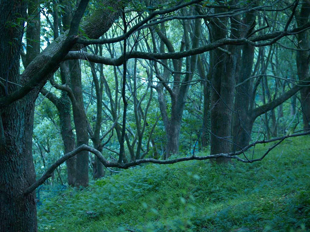 もみの木の家ブログ                bikabi21
