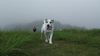 天空の遊び場は霧の中