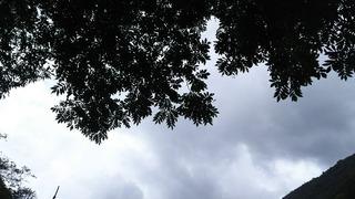 木の下で雨宿り