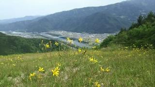 黄色い花がいっぱい^^