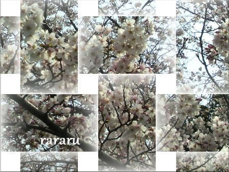 ららる 桜