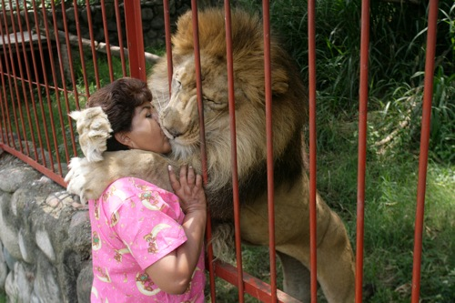 Colombia ana julia torres kisses jupiter a rescued lion in cali rtxehrt