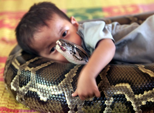 Cambodia three year old boy hugs his best friend a four metre long female python rtxlzue