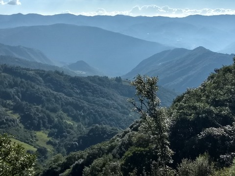 IPS_Mexican forests_1