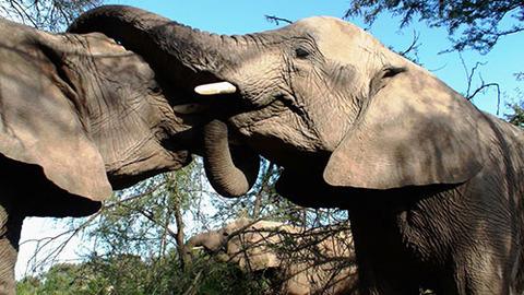 elephants-196613_1920_s