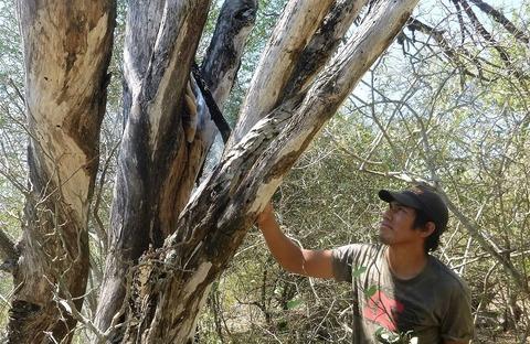 HBA_Indigenous honey gatherers_1