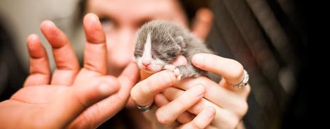 kitten-held-hand