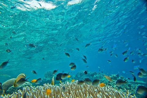 underwater-2347255_640