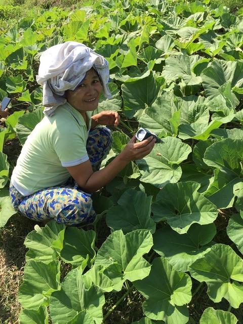 有機野菜栽培講座を受講。土づくりから学ぶ。